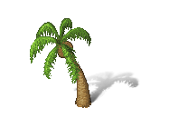 palm_s.png